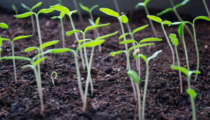 Plant based food: lo que no sabías