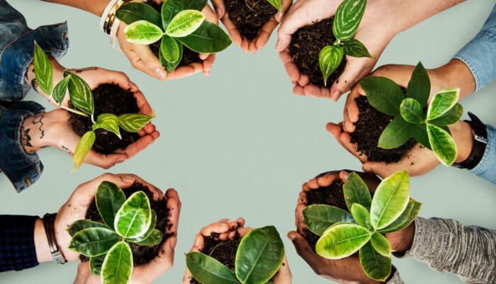 Cómo cuidar el medio ambiente a través de la agricultura de conservación